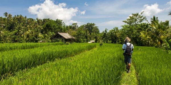 Experience Travel Group holidays - rice paddy