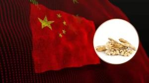 Soja z podwojonym importem do Chin, ale ASF znów straszy