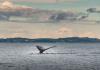 wieloryby-bitcoina