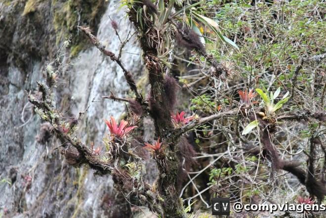 Bromélias no Valle de Cocora