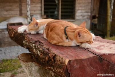 Long day, longhouse