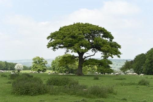 Bucolic scenes in Hertfordshire
