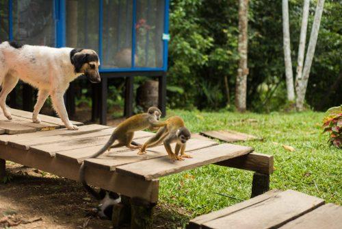 animals in the Amazon