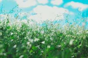 grass allergens
