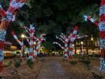 tree lights on Market Square