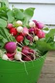 Easter egg radish