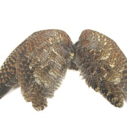 Cookshill Woodcock Wings (1 Pair)