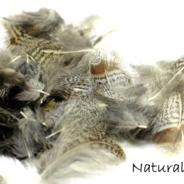 Nature's Spirit Premium Partridge Feathers