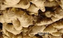 GINGER BUYERS NEEDED FOR OUR 2019 DEALS: GET ENLISTED