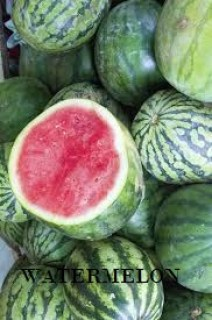 WATERMELON FARMING -  BUSINESS PLAN  AND FEASIBILITY STUDY  TEMPLATE