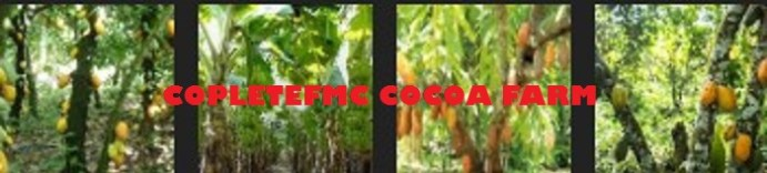 Cocoa Seed Marketing Business Plan Analysis