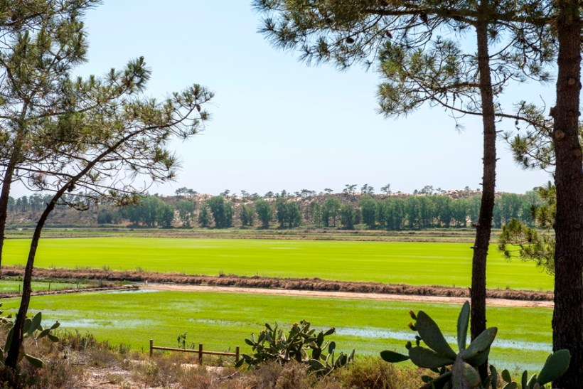 Paddy Fields Comporta