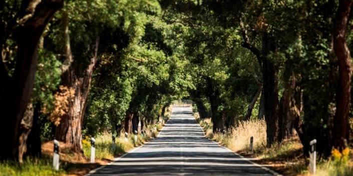 Natures Tunnel - Grandola to Comporta