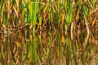 Brejos da Carregueira Rice
