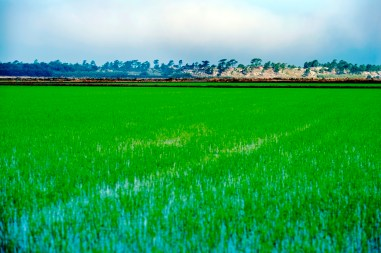 Rice Fields and Dunes Comporta Portugal