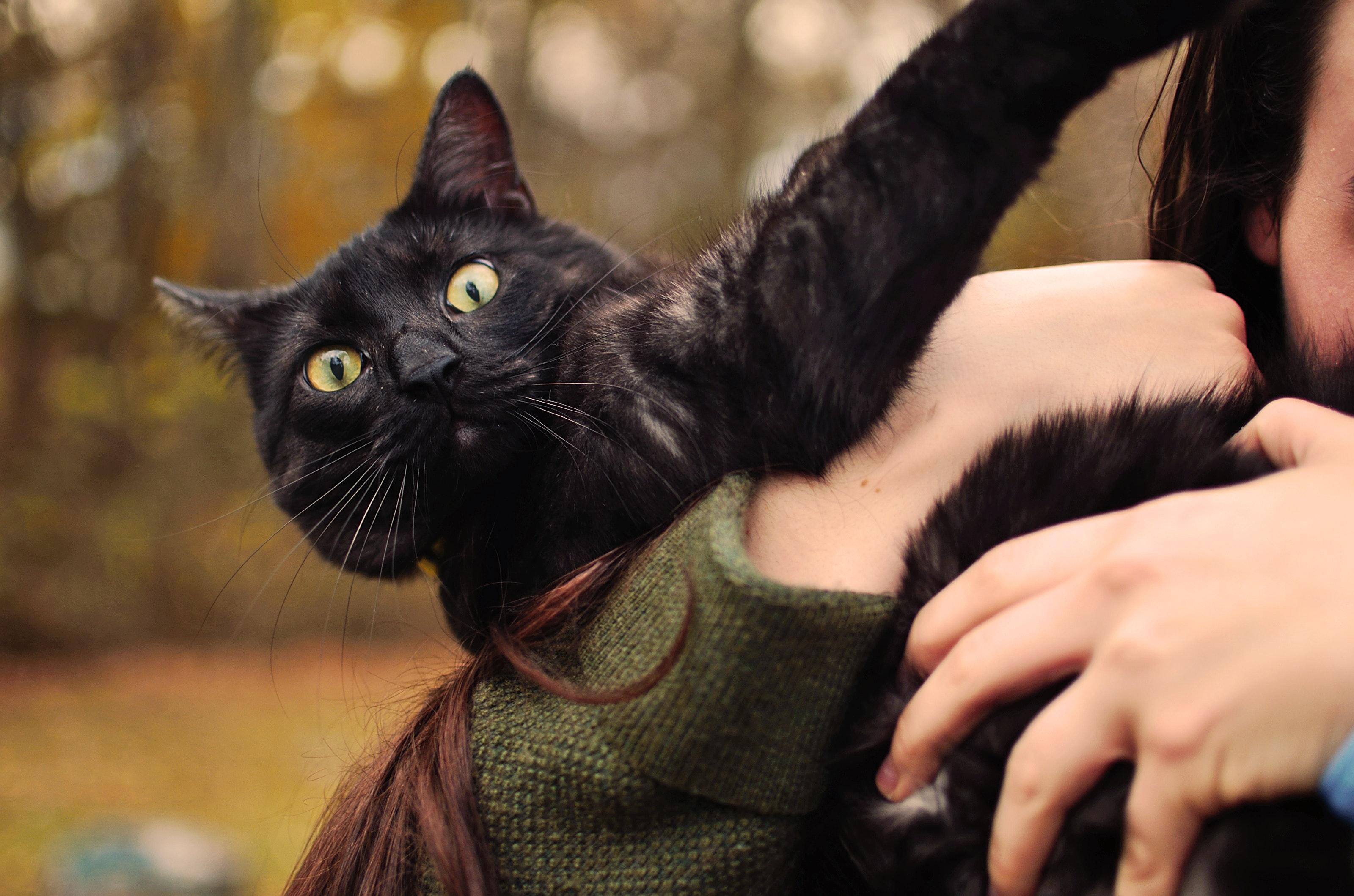 Une personne tient un chat qui cherche à s'échapper. Les interactions entre chat et humains ne sotn pas toujours positives.