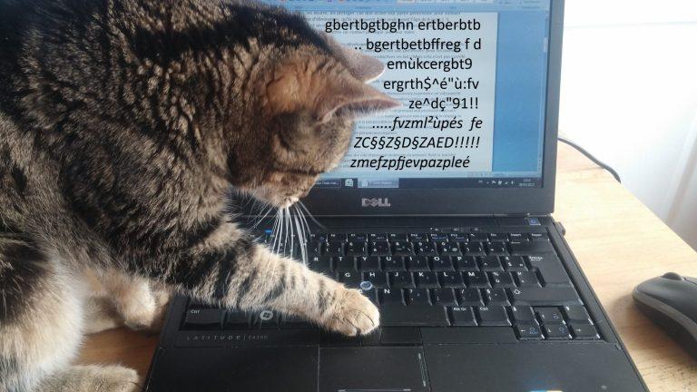 Un chat tape sur un clavier d'ordinateur