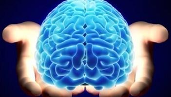 Dica de leitura: Contribuições das Neurociências para o Estudo do Comportamento Discriminativo 20