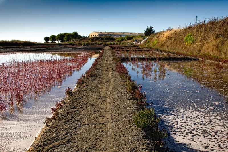 Landscape photography of the Guérande salt marshes