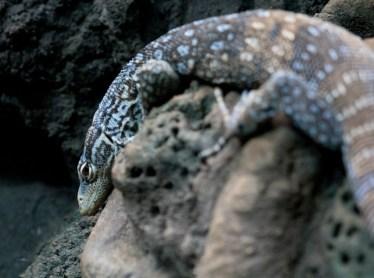 Unknown reptile