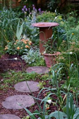 Garlic heads line the path to the birdbath