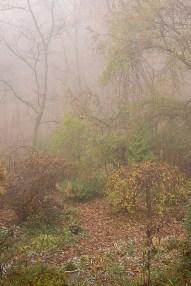 The garden in mist