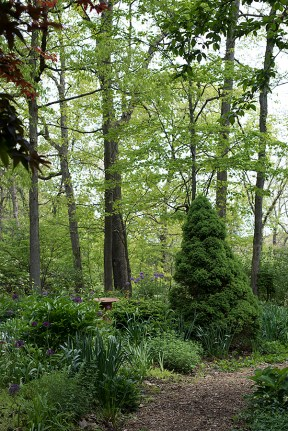 Trees and herb garden