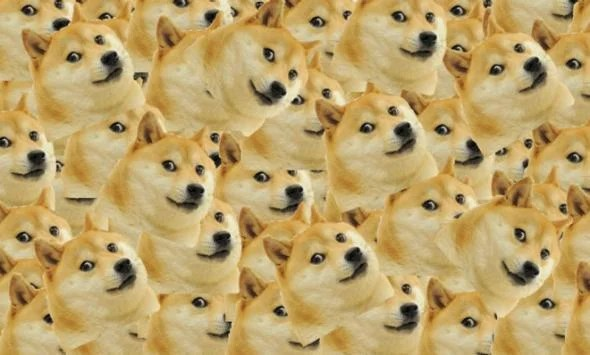 doge why we can