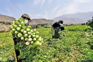 Reglamento de Compras Estatales de la Agricultura Familiar listo en 10 días
