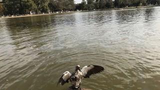 O que fazer em Buenos Aires - El Rosedal