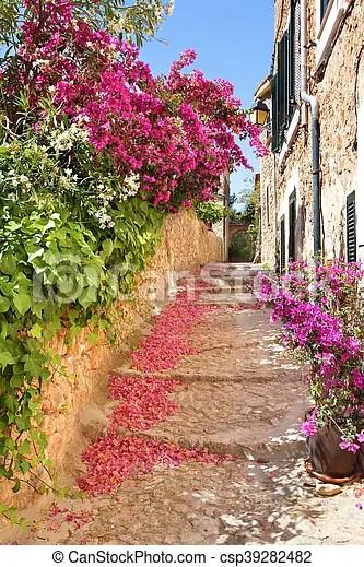 Blumen Kaufen Mallorca