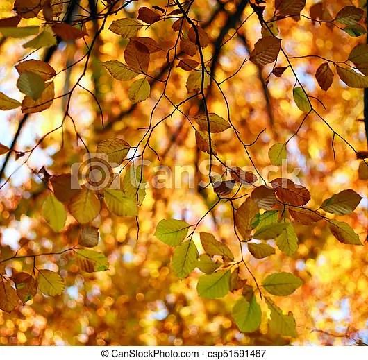 fall background yellowing foliage