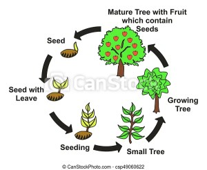 Plant life cycle diagram with all stages seed with leave