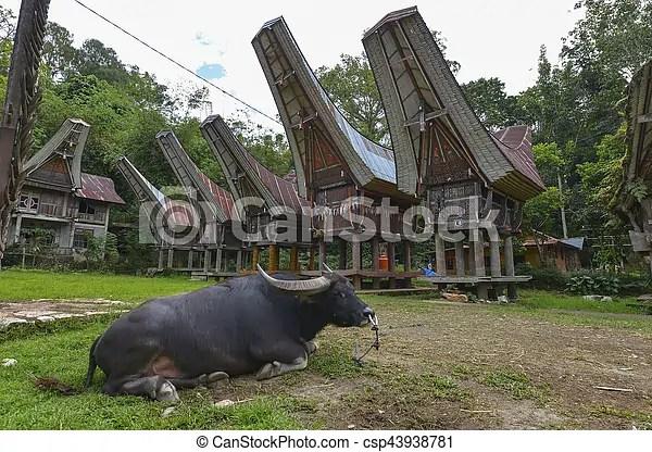 Indonésia. toraja. sulawesi. tana. Indonésia. tongkonan. tradicional. casas. tana. toraja. sulawesi.   CanStock