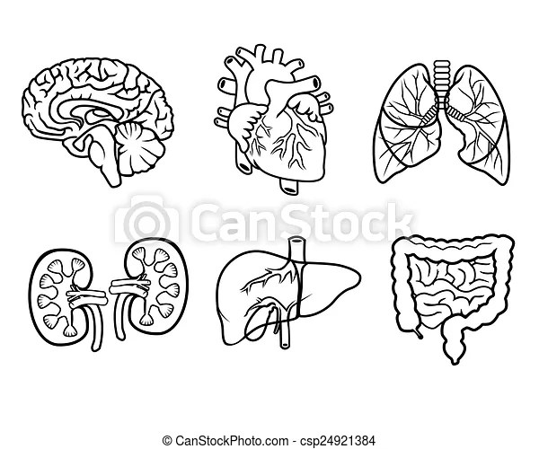 Anatomy organs. Vector black and white icons of anatomical