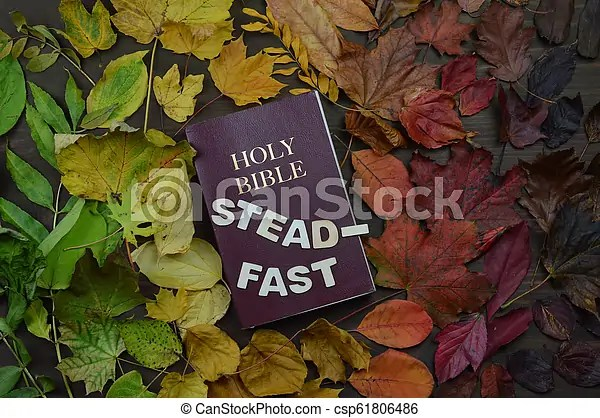 autumn leaves with bible