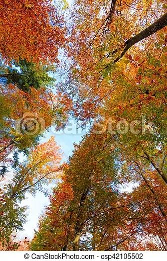 autumn trees leaves autumn