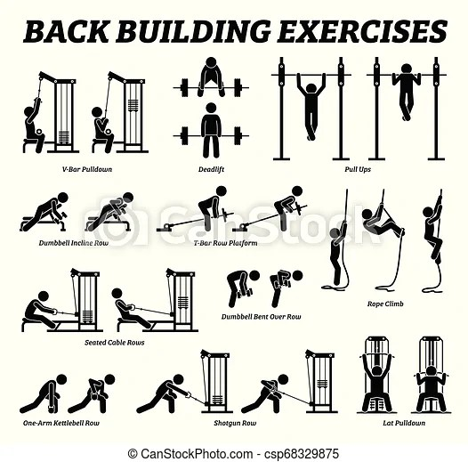 Back building exercises and muscle building stick figure