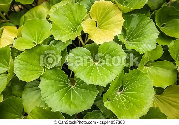 big green leaves