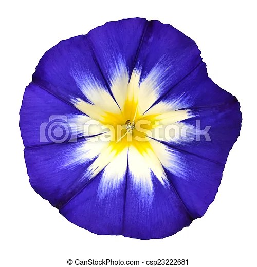 blue flower with white