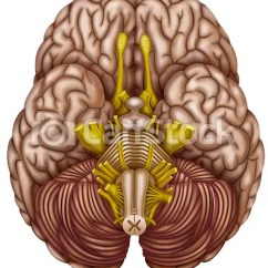 Lower Brain Diagram Two Speed Motor Wiring 3 Phase Bottom View Of The Illustration Where They Teach Csp15217755