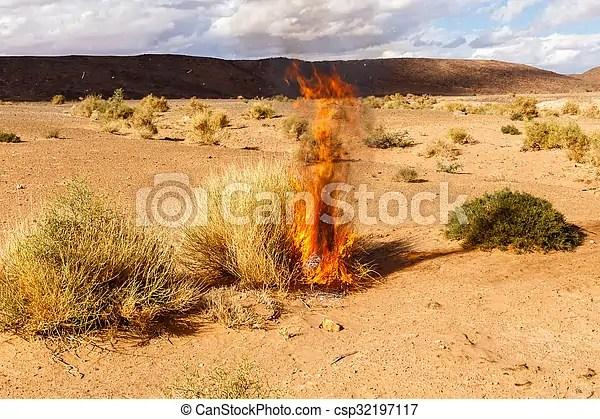 burning bush strauch # 25
