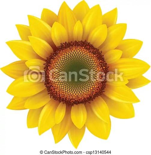 eps vector of sunflower