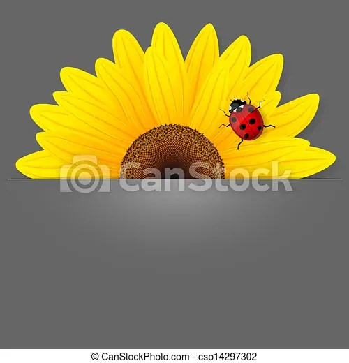 vector clipart of sunflower