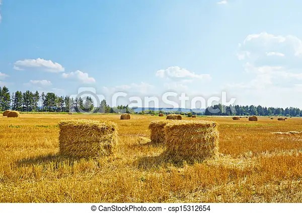 stock illustrations of hay vertical