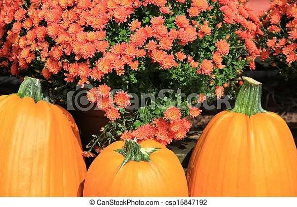 stock of three pumpkins