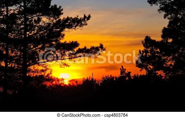 Coucher soleil, derrière, les, Arbres - csp4803784