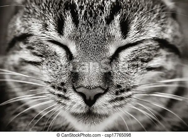 closeup of sleeping cat