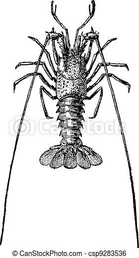 Crayfish or crawdads, vintage engraving. Crayfish or