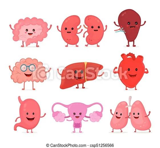 Cute smiling happy human healthy strong organs set vector